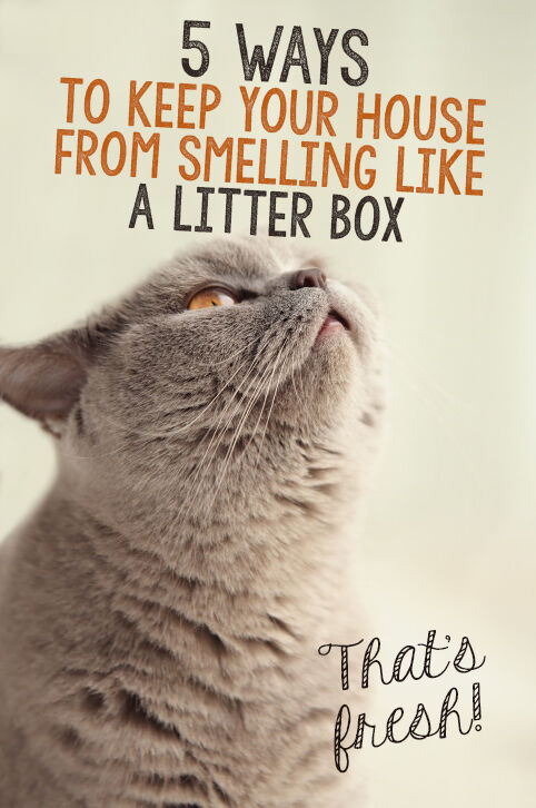 Stop Cat Litter Box Smelling