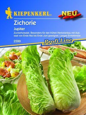 Kiepenkerl - Zichorie * Jupiter * 2399 Zuckerhutsalat Profi-Line Salatsamen