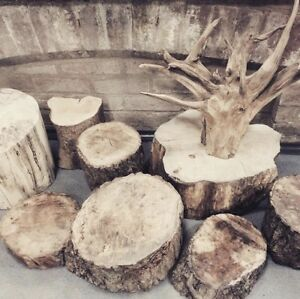 pine wood tree trunks ( stumps ) and tree root for sale
