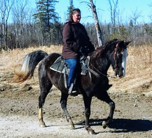 TRAIL HORSE FOR SALE! - DIVA IS BEAUTIFUL & SWEET