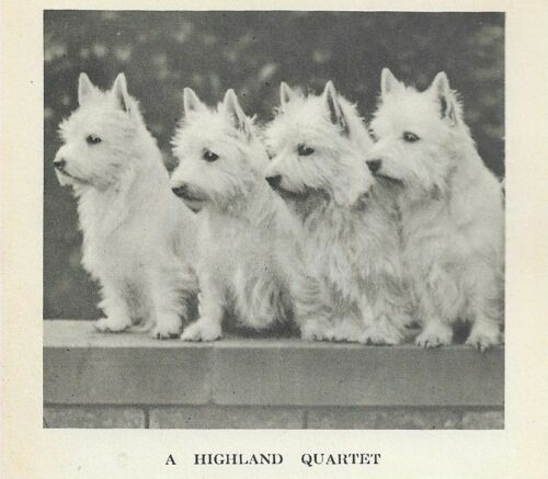"West Highland White Terrier ""P"" - 1931 Vintage Dog Print - MATTED"