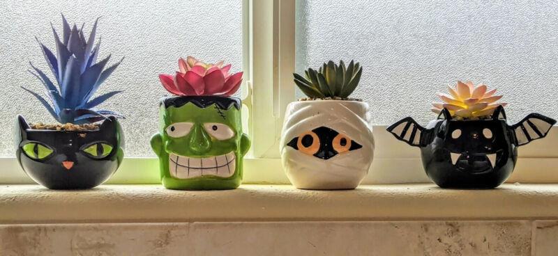 Halloween Succulent Plants Set of 4 Mummy, Frankenstein, Bat, and Cat