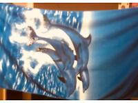 Dolphin design beach towels