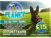 Dog and Puppy training in South West and Central London