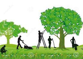 Gardening service / grass cutting ~ALL LONDON~CALL:07425285978 Pawel