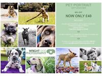 Pet Photography Gift Voucher - 60% OFF - Only £40 - Including £30 free prints