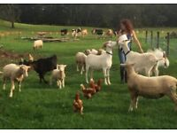 Looking for land to rent or buy for an animal sanctuary near Bristol. About 3-10 acres?