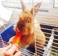 Free rabbit with cage