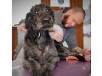 Qualified Dog groomer looking for place to work or table for rent in the West Midlands
