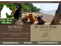 Dogs Gone Roaming - Dog walking and pet services.