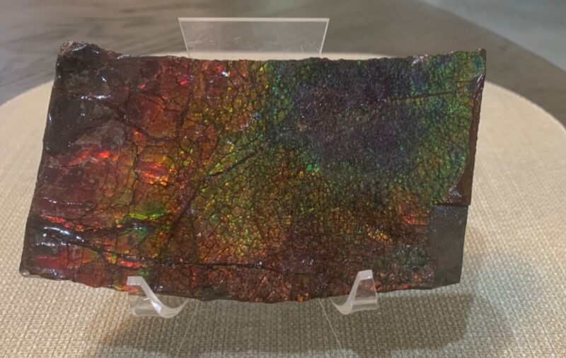 """Ammolite Display Piece Approximately 3"""" High x 5"""" Wide x 1/2"""" Thick"""