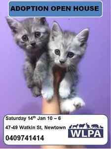 NEW KITTENS SAT & SUN NEWTOWN (WLPA) Newtown Inner Sydney Preview