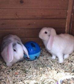 Rabbits ready to go
