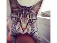 missing cat in bexleyheath