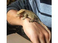 Exo terra & crested gecko