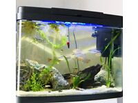 40L Tropical fish tank Full setup*Home Delivery*