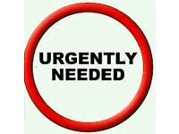 Required a one bed flat/house