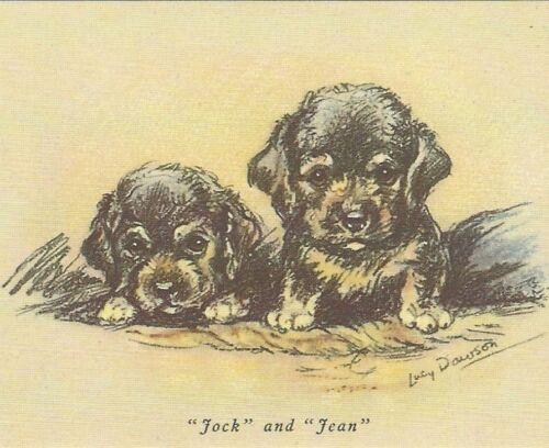 Dandie Dinmont Terrier Puppy - MATTED Dog Print - Lucy Dawson