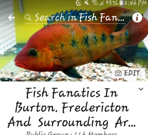 Fish group Facebook Hit me up