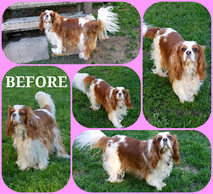 Low Cost Dog Grooming for Small to Medium Dogs in a Home Setting