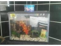 Small fish tank/aquarium with accessories
