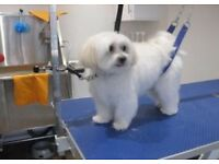 City & Guilds Trained Dog Groomer/Walker/Sitter Available In Chipping Norton