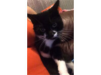 Sonny, 3 year old Tom cat for sale