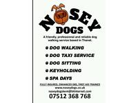 Nosey Dogs: Walking, dog sitting, day/night/holiday care, taxi service and spa days
