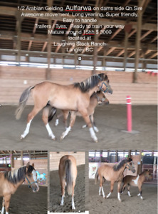 1/2 Arab QH Mix
