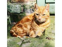 Missing - ginger Tabby Cat L19/Garston