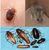 BED BUGS-PEST CONTROL(REGISTERED) PROACTIVE FOLLOW UP