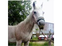 Horse for share ASAP