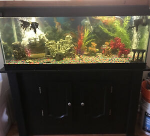 75 gallon fish tank, stand, accessories and fish included