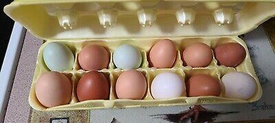 Eggs Chicken Duck Fresh