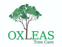 Tree surgeons tree surgery Arborist jobs available-climbers, groundsperson needed - Swanley based