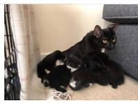 4 kittens ready for forever homes£20 each