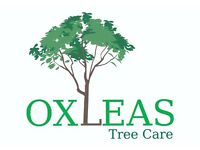 Tree surgeon, Climbers, Groundsman and Apprentice wanted SE London/NW Kent