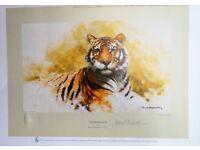 David Shepherd Prints - Lion and Tiger, size 32 by 24 cm.