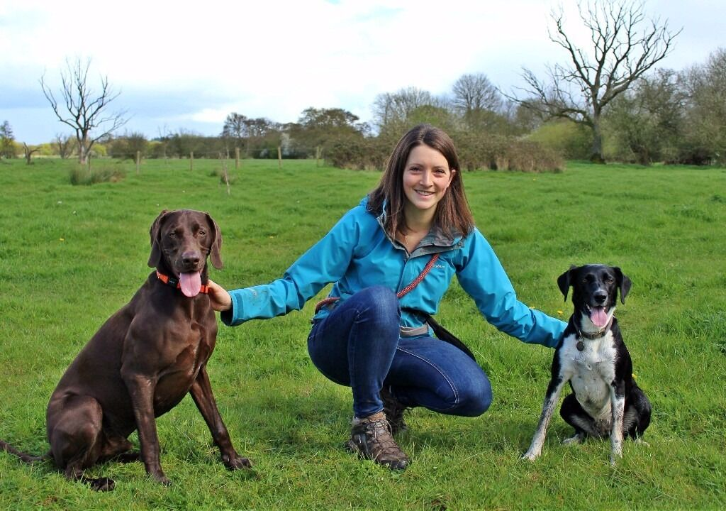 Professional Dog Walking, Boarding/Sitting, Day Care and more.