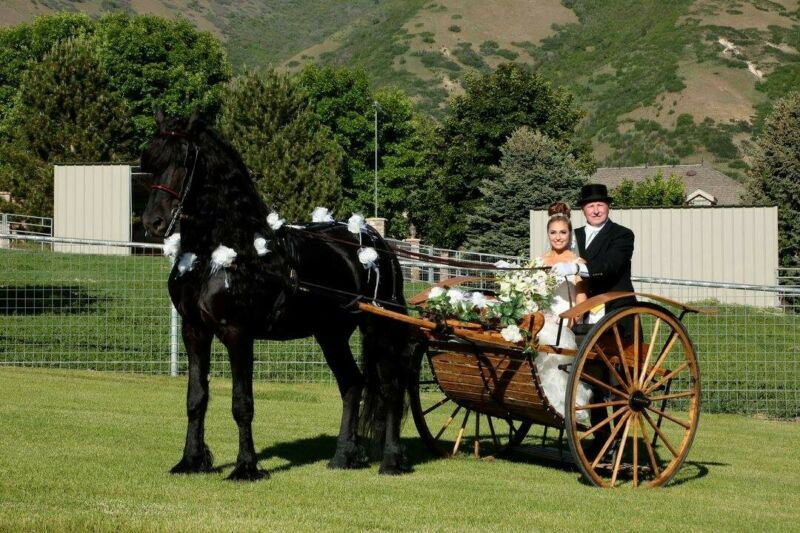 Beautiful Custom Oak Meadowbrook Amish Horse Carriage