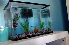 Fish Tank 21L Willetton Canning Area Preview