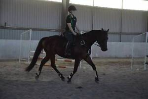 Perfect All rounder Albany Albany Area Preview