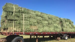 Pure alfalfa squares for sale