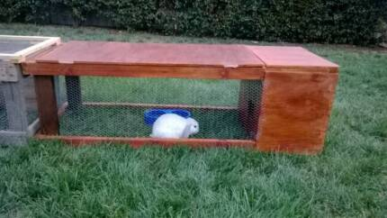 Rabbit cages, food and bowls