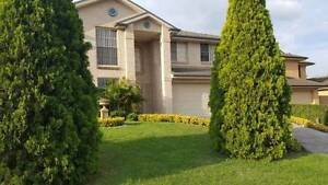 Share Accommodation Available At Rouse HIll Rouse Hill The Hills District Preview