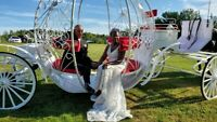 Horse and carriage wedding services, special occasions