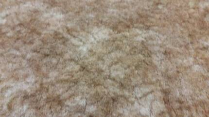 Carpet 3 rolls of 3.6 x 6metres and 1 piece 3.8 x 2.7 approx