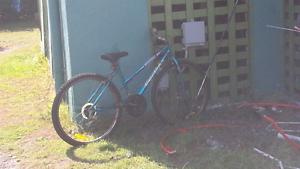 Adult bike Hendra Brisbane North East Preview