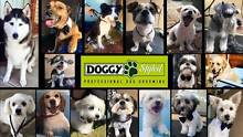 DOGGY STYLED : Mobile Dog Wash 7 days Grooming / Groomer Parafield Gardens Salisbury Area Preview