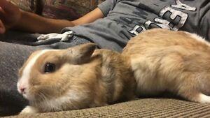 2 Loving Bunny Pair for Sale!! PLUS ACCESSORIES